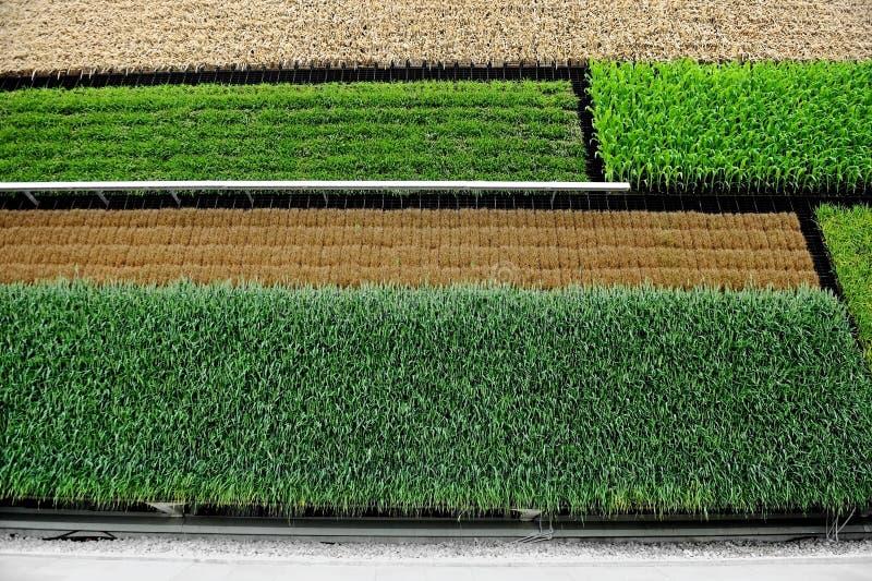垂直的农业 库存照片