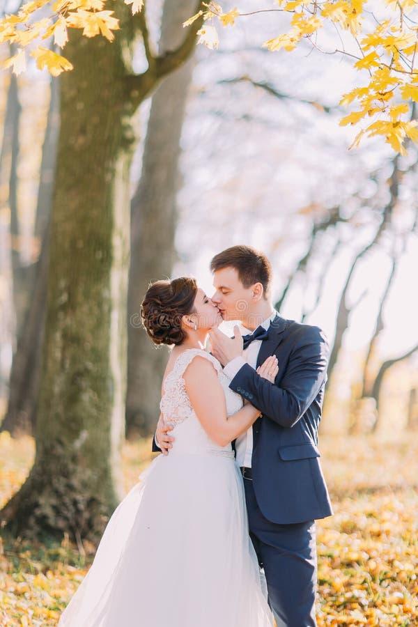 垂直的观点的秋天公园的背景的亲吻的新婚佳偶 库存照片