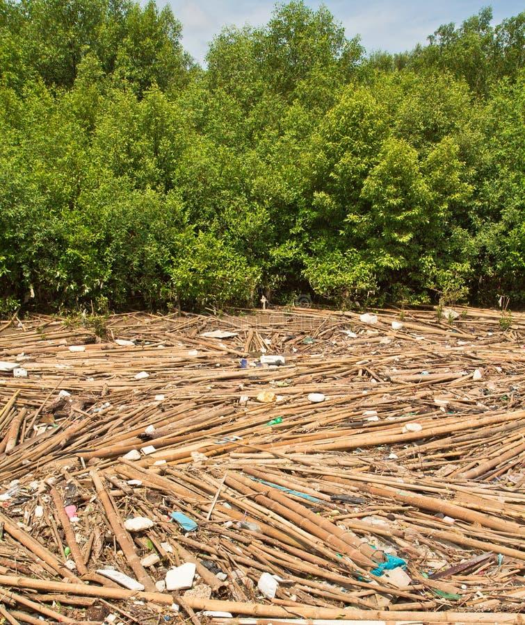 垃圾在美洲红树森林里 库存照片