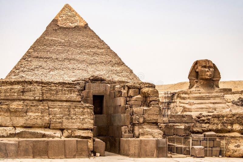 埃及伟大的狮身人面象充分的身体画象头,有吉萨棉背景埃及金字塔的空以没人 复制空间 免版税库存图片