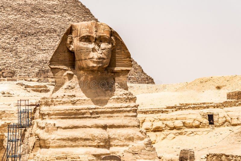 埃及伟大的狮身人面象充分的身体画象头,有吉萨棉背景埃及金字塔的空以没人 复制空间 免版税库存照片
