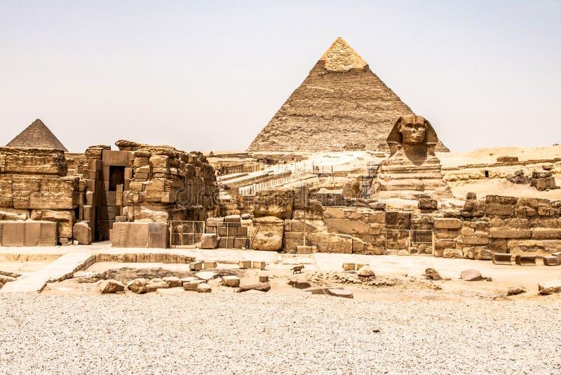 埃及伟大的狮身人面象充分的身体画象头,有吉萨棉背景埃及金字塔的空以没人 复制空间 库存图片