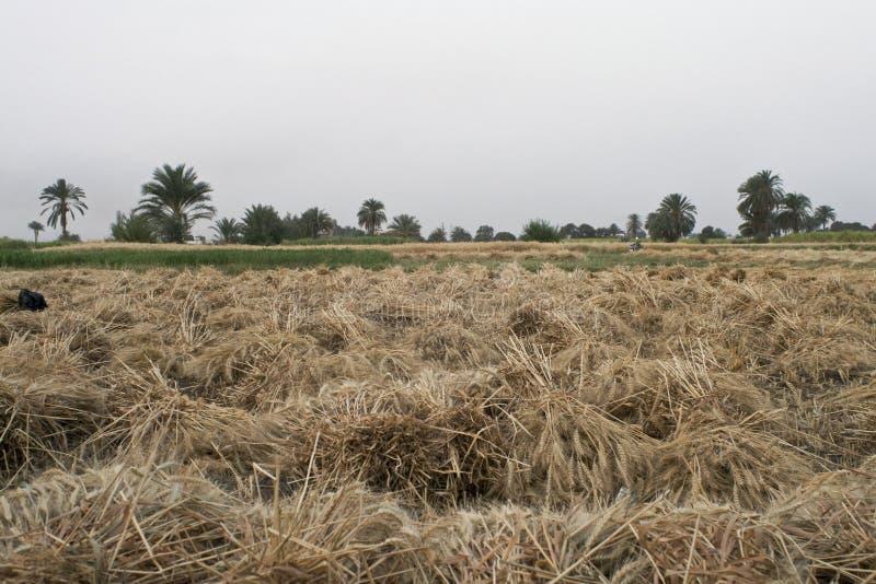 埃及农场 库存照片
