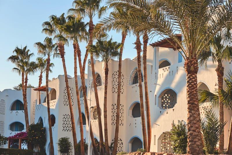 埃及旅馆秀丽早晨 免版税库存图片
