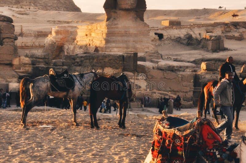 埃及的马 库存图片