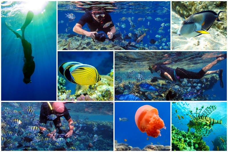 埃及红海热带水域浮潜 免版税库存照片