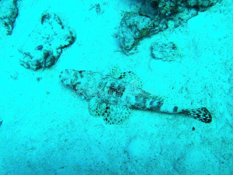 埃及,大而美的鱼 免版税图库摄影