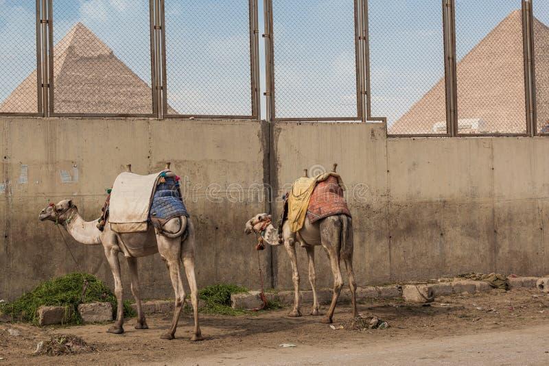 埃及,开罗2012年11月:吉萨棉金字塔 免版税库存图片