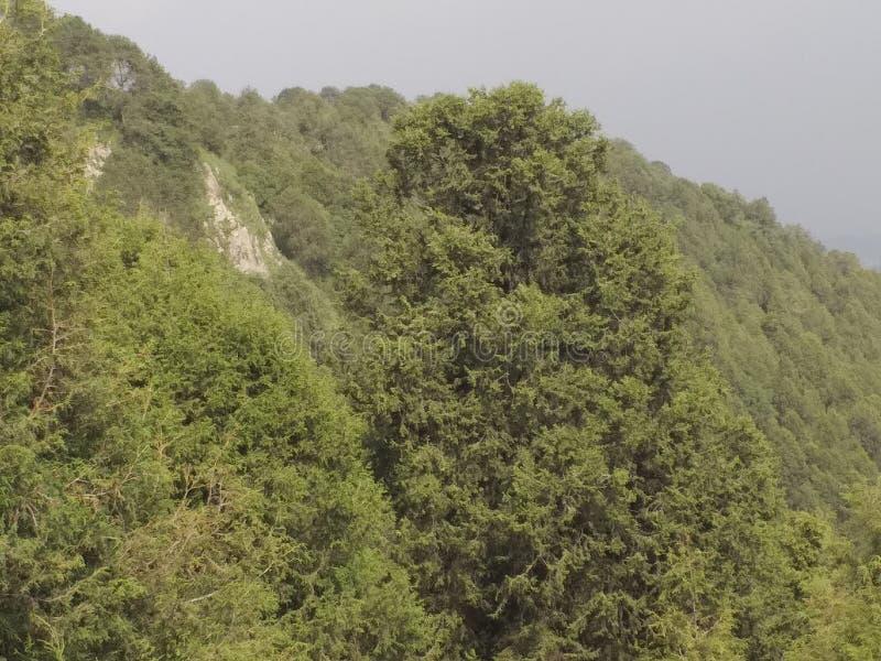 埃塞俄比亚亚的斯亚贝巴的植物园。埃塞俄比亚亚的斯亚贝巴植物园植物园 免版税库存照片