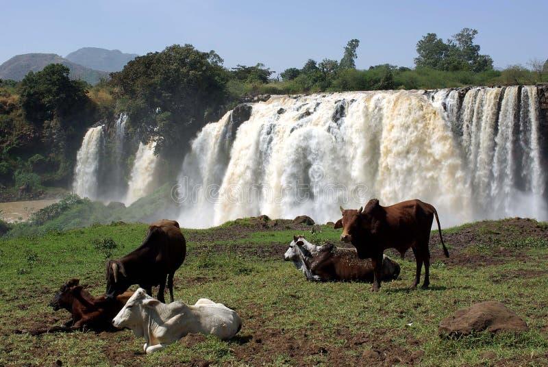 埃塞俄比亚瀑布 免版税图库摄影