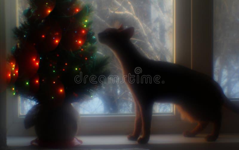 埃塞俄比亚猫在窗口站立并且嗅圣诞树 库存照片