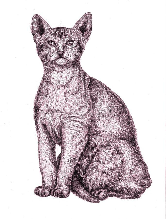 埃塞俄比亚猫开会,手拉的墨水例证 皇族释放例证