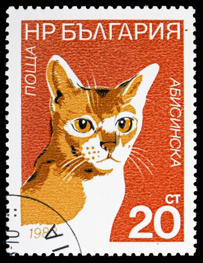 埃塞俄比亚(猫属silvestris catus),猫serie,大约1983年 皇族释放例证