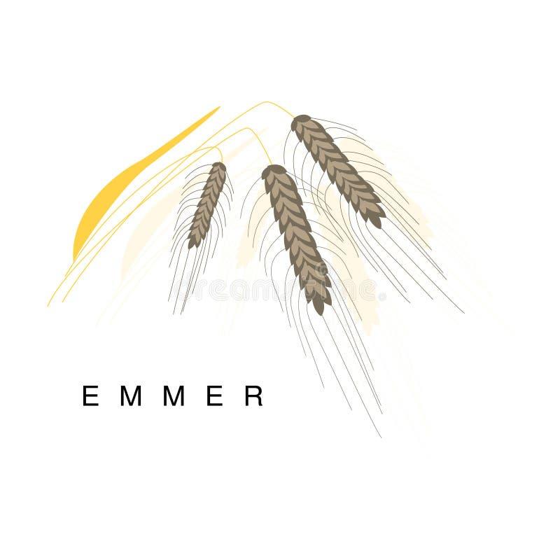 埃默耳朵、Infographic例证与现实谷物庄稼和它的名字 向量例证