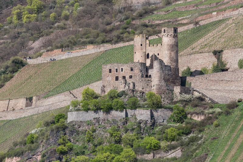 城堡废墟ehrenfels bingen德国 图库摄影