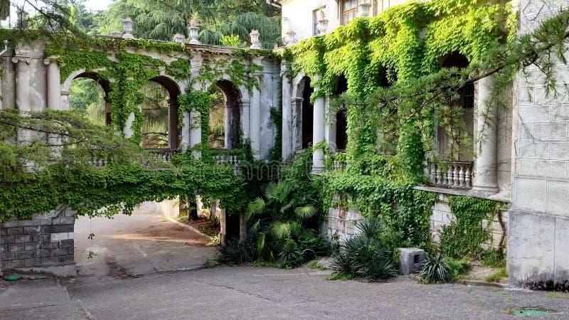 城堡曲拱和柱子纠缠与绿色常春藤 库存图片