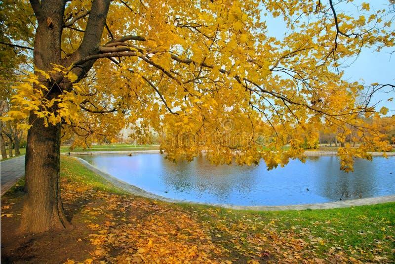 城市公园秋天风景有金黄树和池塘的 免版税库存图片