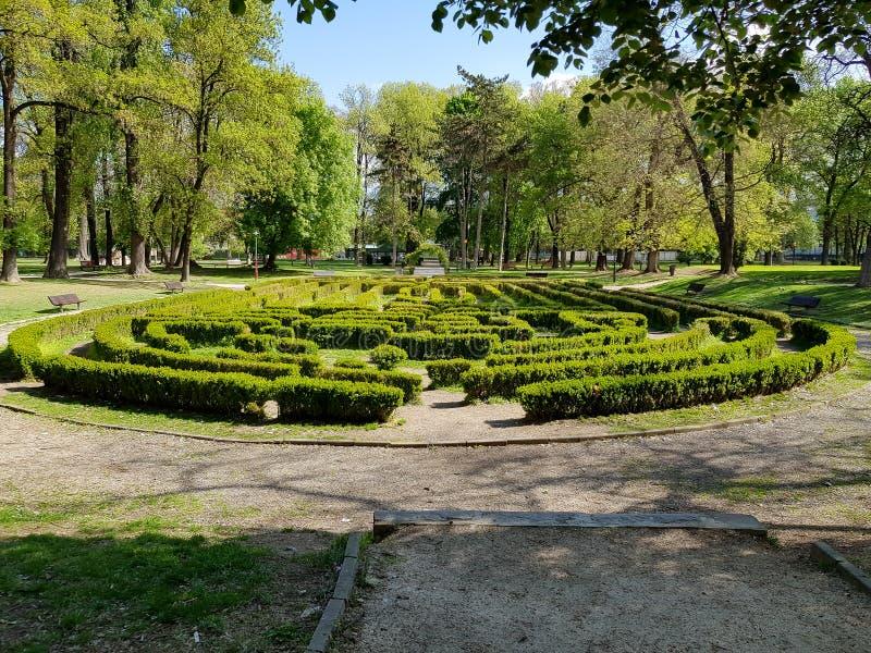 城市公园绿色树篱迷宫的侧视图 图库摄影