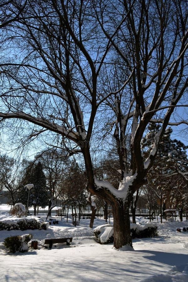 城市公园4的3月故事 免版税库存图片