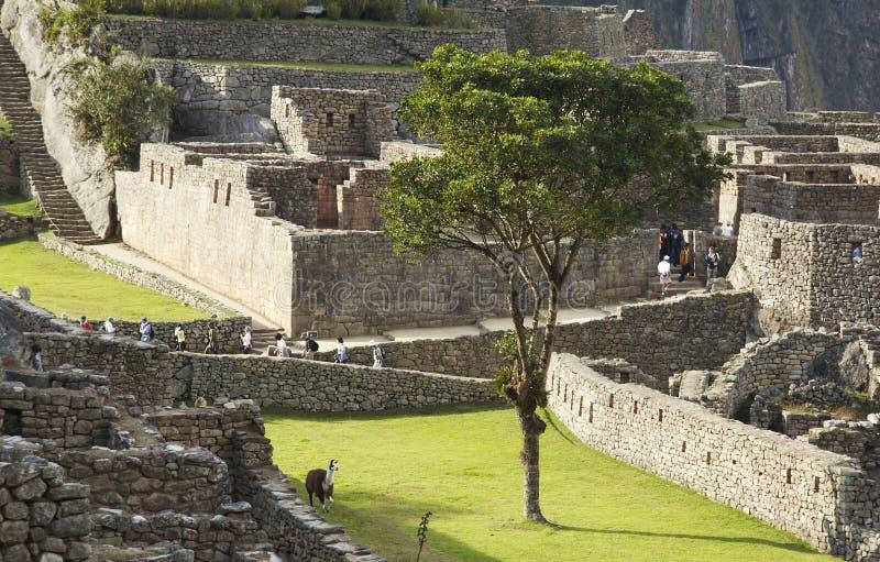 城市印加人失去的machu picchu 库存照片