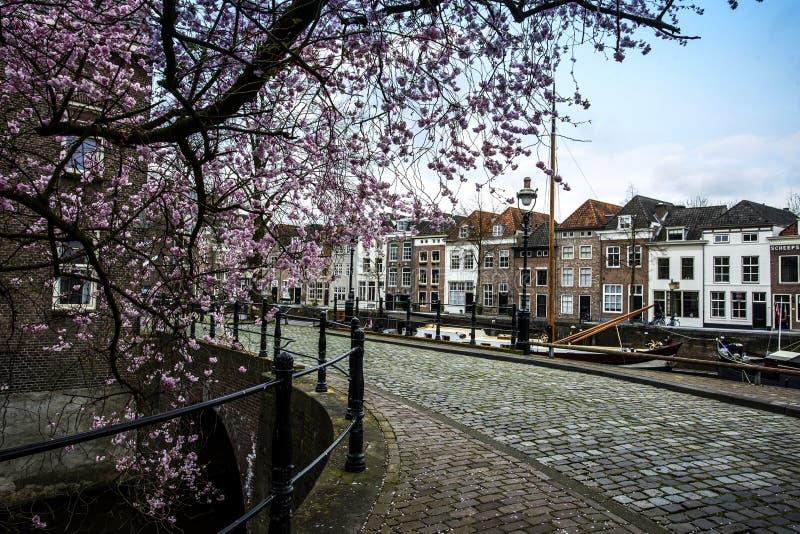 城市在有美丽的老房子和一棵桃红色树的荷兰 库存图片
