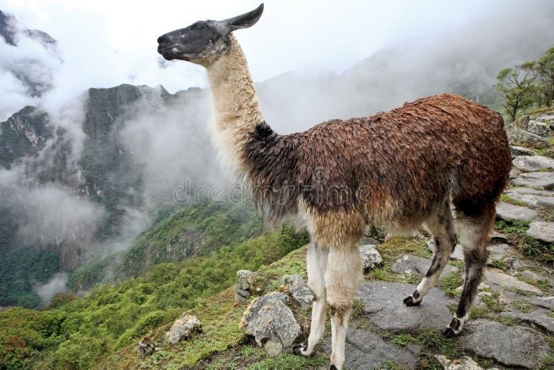 城市有历史的失去的machu秘鲁picchu 免版税图库摄影