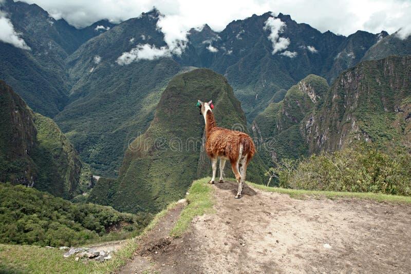 城市有历史的骆马失去的machu picchu 免版税库存照片