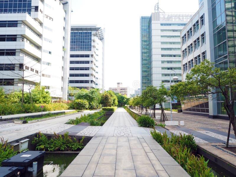 城市树 库存图片