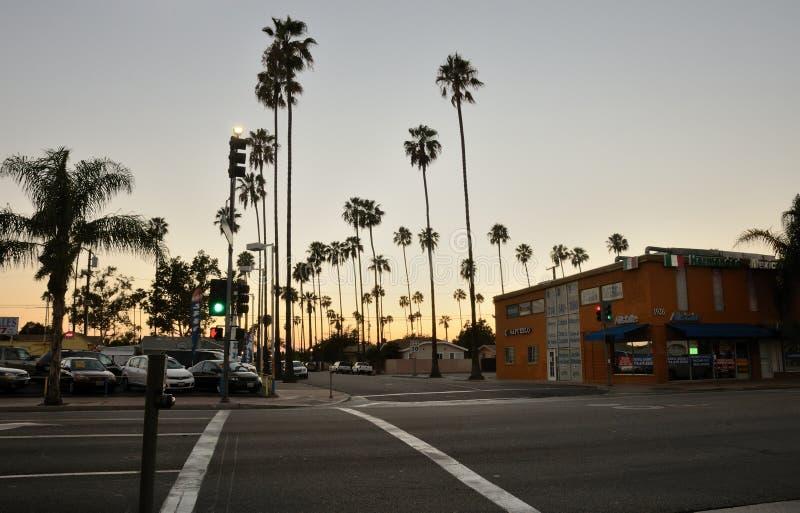 城市棕榈树 图库摄影
