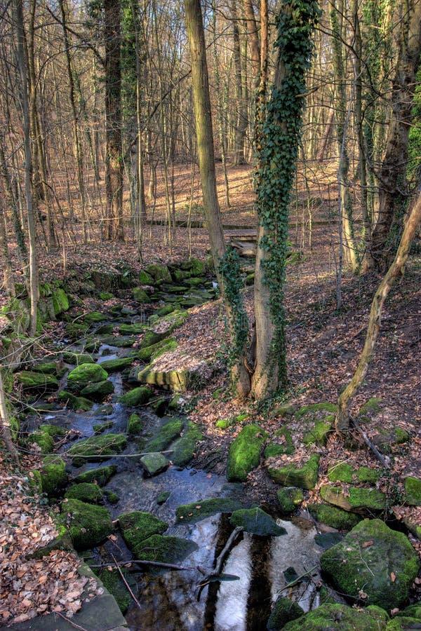 城市森林法兰克福流 库存照片