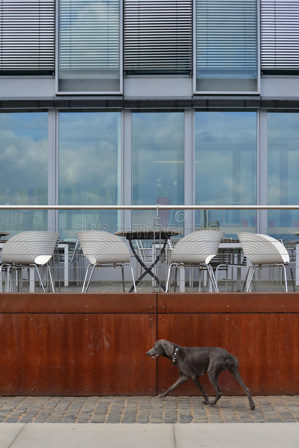 城市狗 免版税图库摄影