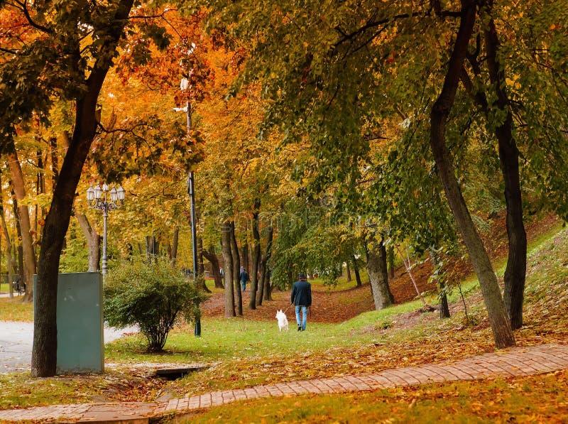 城市秋天公园,与狗的步行,自然光 库存照片