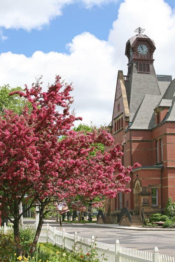 城市结构树 免版税图库摄影