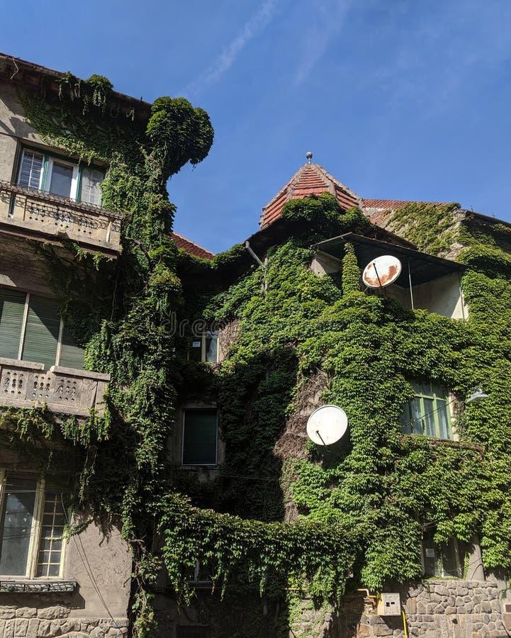 城市自然 — 罗马尼亚阿拉德县阿拉德市常春藤之家 免版税库存图片