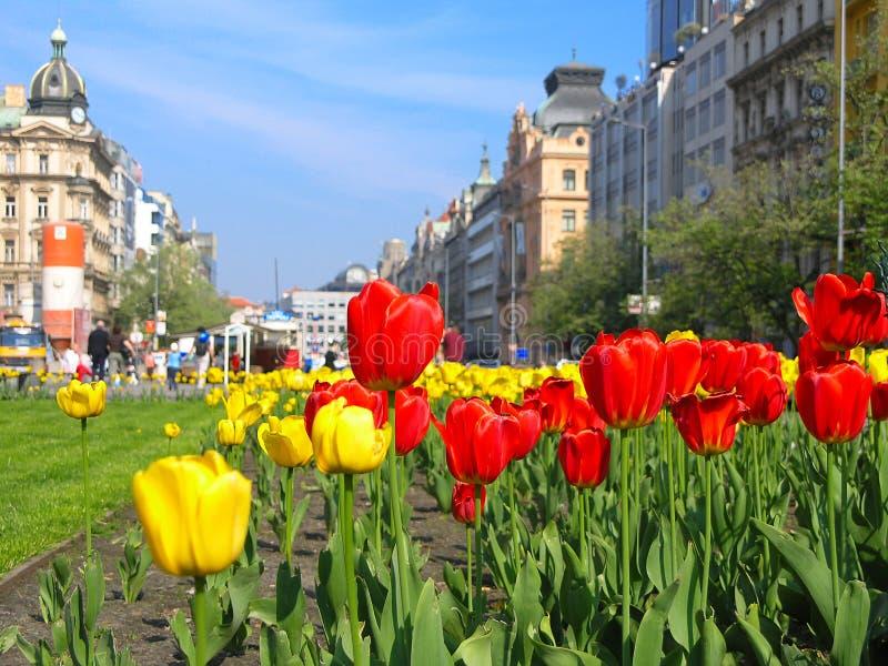 城市花 库存图片