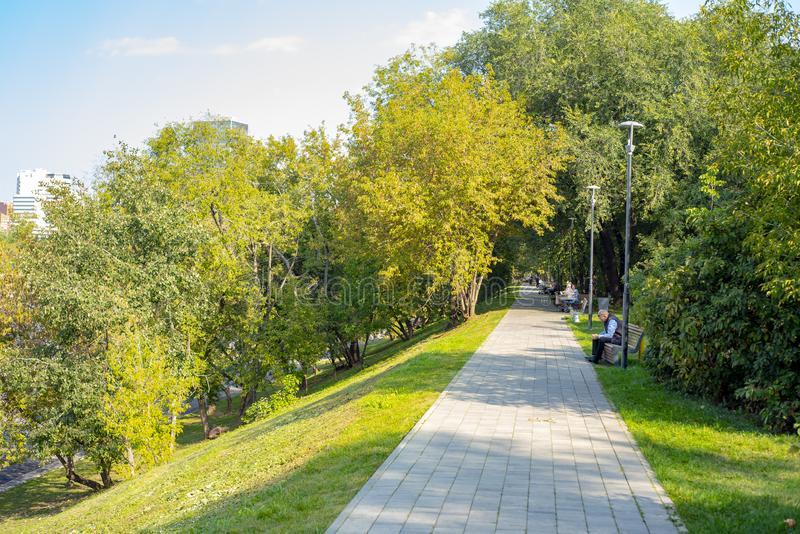 城市莫斯科地区,美丽的公园树 免版税库存照片