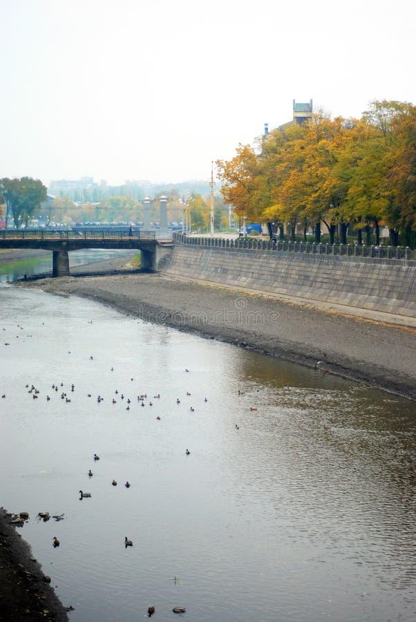 城市风景、河堤防、鸭子游泳在灰色水中的,桥梁和黄色树我天际,多云秋天天 库存照片