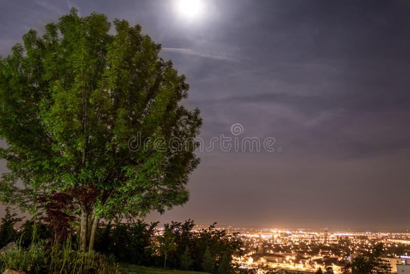 城市风景在夜和一棵绿色树之前 库存照片