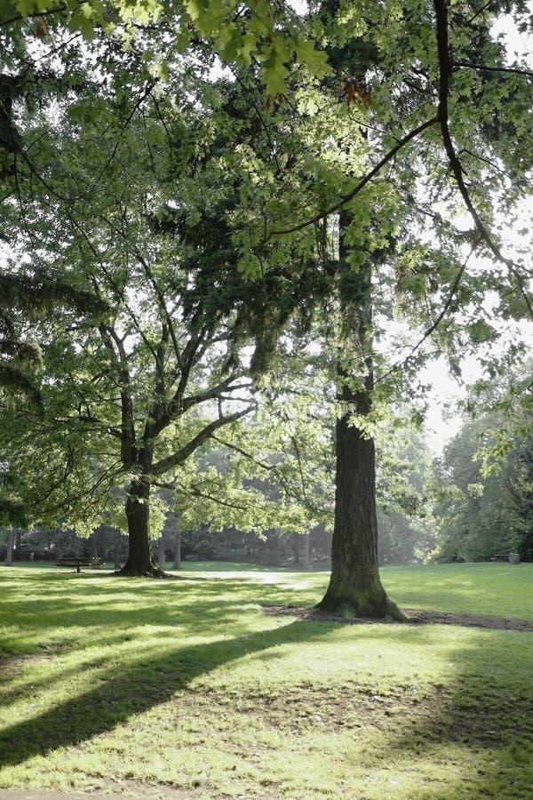 城市lauralhurst俄勒冈公园波特兰 库存照片