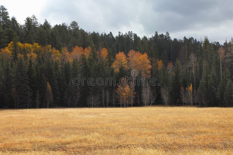 域临近北部外缘森林 库存照片