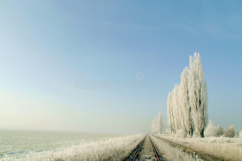 域冻结的横向多雪的结构树冬天 库存图片