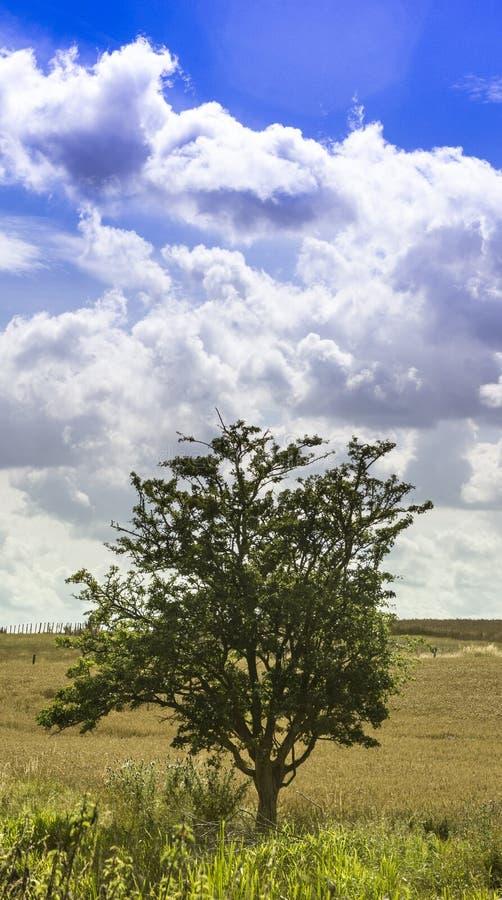 域唯一结构树 库存照片