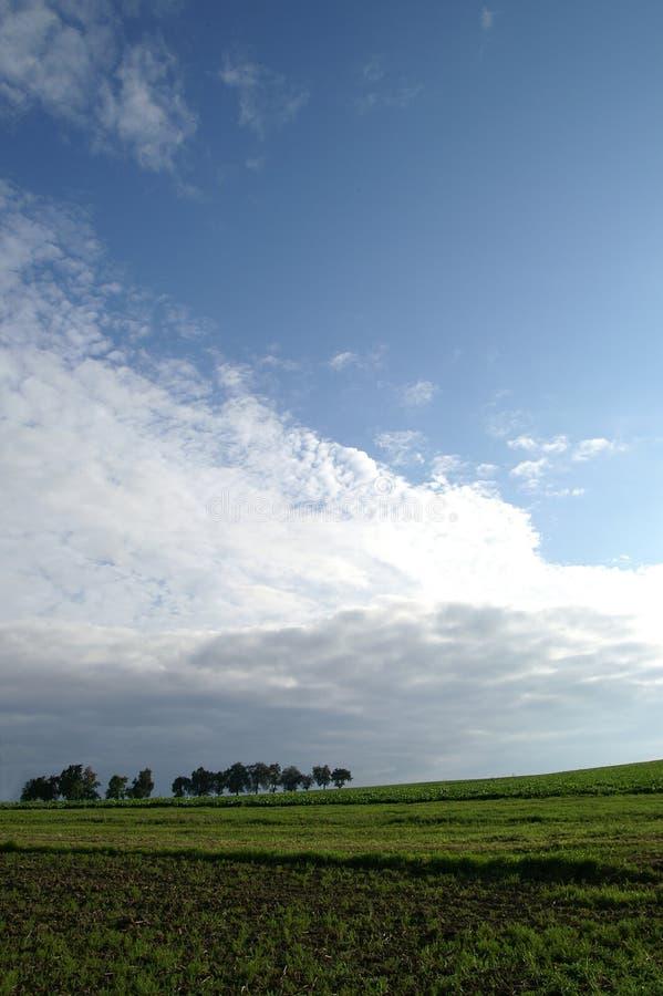 域天空结构树 免版税库存图片