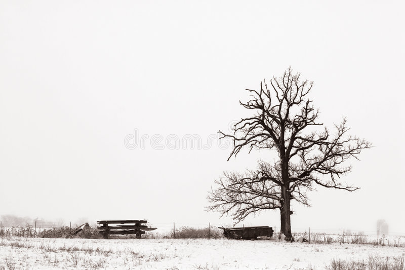 域孤立多雪的结构树 免版税库存图片