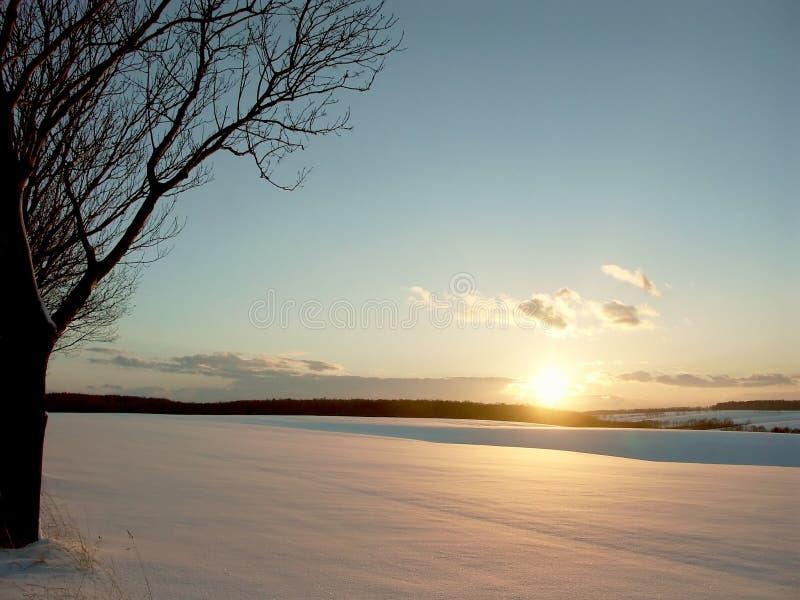域日落结构树冬天 库存照片