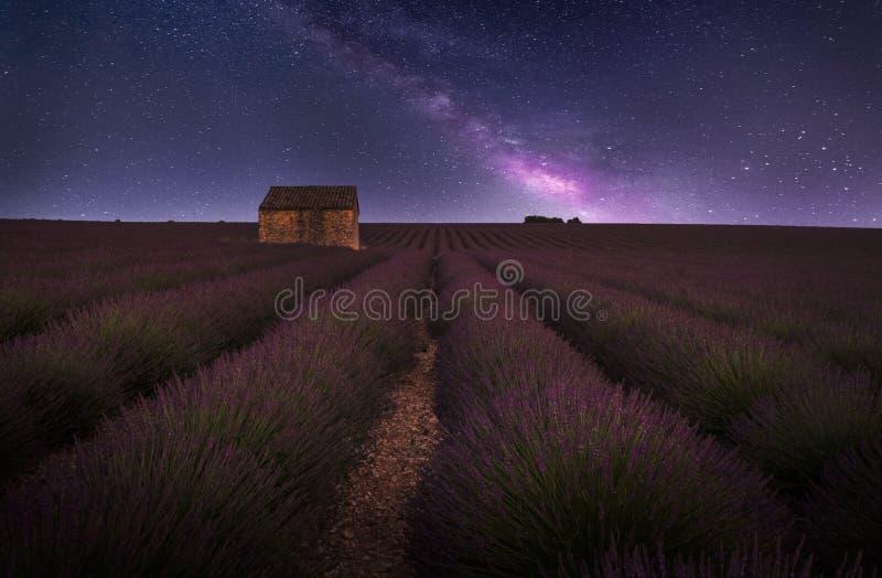 域淡紫色普罗旺斯 免版税库存图片