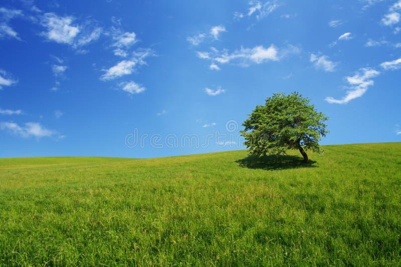 域结构树 图库摄影