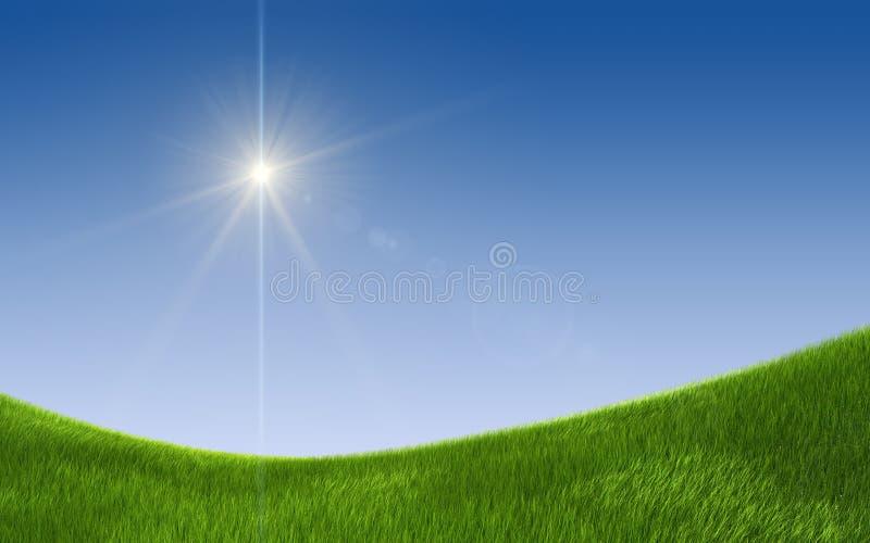域绿色夏天 库存照片