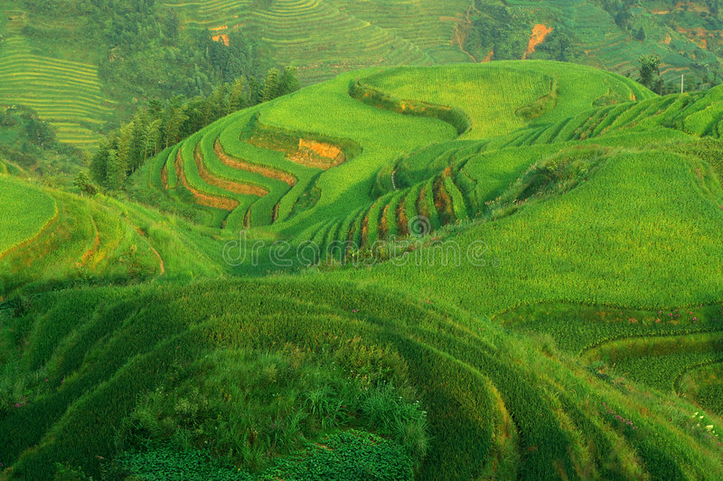 域绿色横向米 库存图片