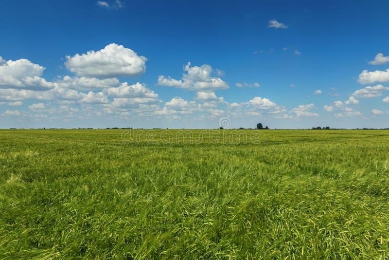 域绿色横向麦子 调遣绿色麦子 库存图片